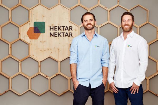 Mit hektarnektar.com dem Insektensterben entgegenwirken