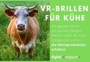 VR-Brillen für Kühe – russische Landwirtschaft wird kreativ