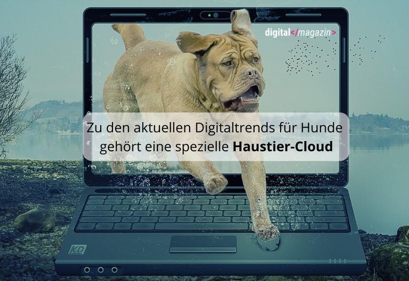 Haustier digital – Digitalisierung für den Hund